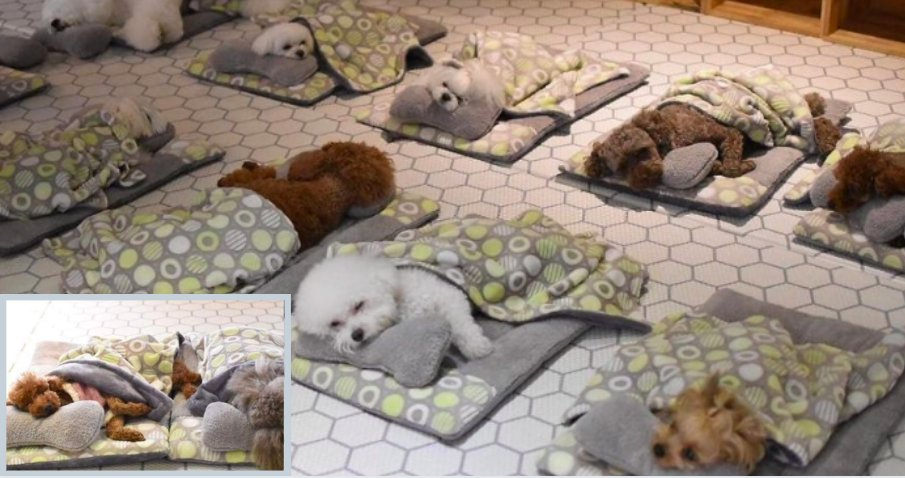 y5 2.png?resize=1200,630 - Photos of Adorable Sleeping Puppies in A Puppy Day Care Are Getting Viral