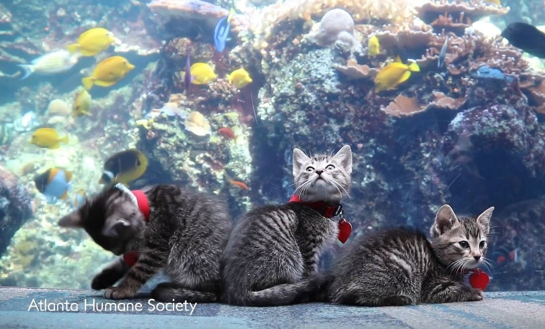 adorable puppies and kittens get to visit aquarium