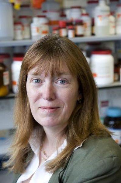 Sarah Gilbert - Nuffield Department of Medicine