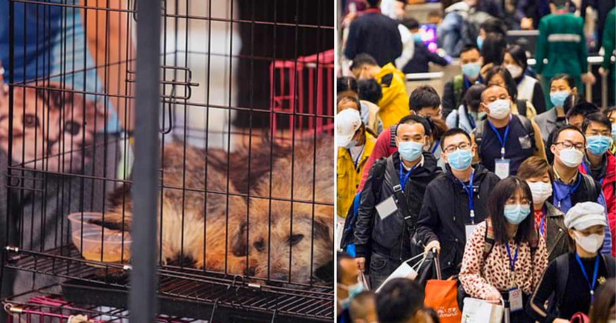 2 5.png?resize=1200,630 - Shenzhen, China Bans the Consumption of Dogs and Cats After the Outbreak of Coronavirus Pandemic