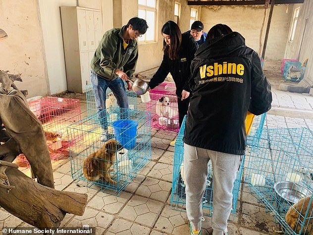 Volunteers give water to some of the rescued dogs, which have been put into separate cages