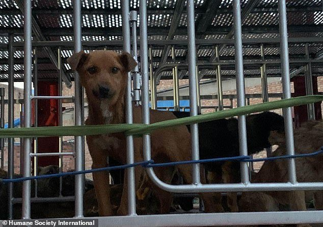 Activists have called on Beijing to bar wild animals, as well as dog and cat meat, from the dinner plate after the coronavirus outbreak emerged in the city of Wuhan in December