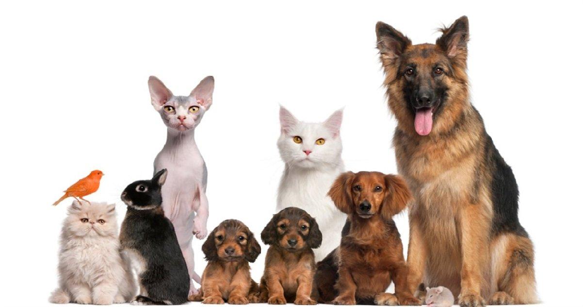 animaux.jpg?resize=412,275 - Et pourquoi ne pas adopter un animal pendant cette quarantaine ?