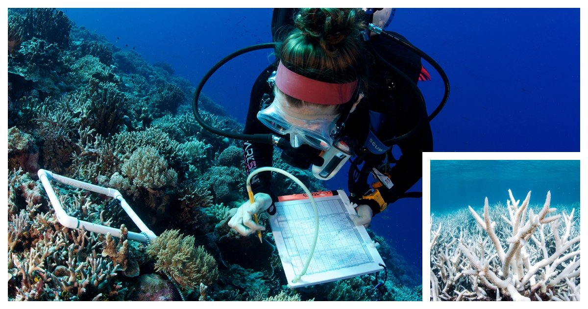 coral cover 1.jpg?resize=1200,630 - Researchers Are Decoding The Secrets of The World's Most Resilient Coral Reef