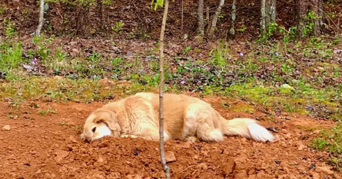 d3 5.jpg?resize=1200,630 - Three-Legged Dog Mourned His Animal Friends By Staying Next To Their Graves
