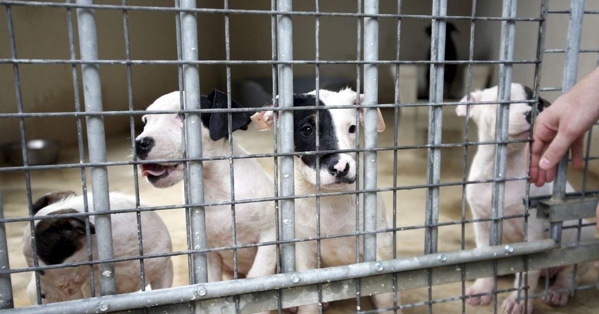 france 3 regions 5 e1586607159860.jpg?resize=1200,630 - Confinement : Une dérogation accordée pour l'adoption d'animaux de refuge