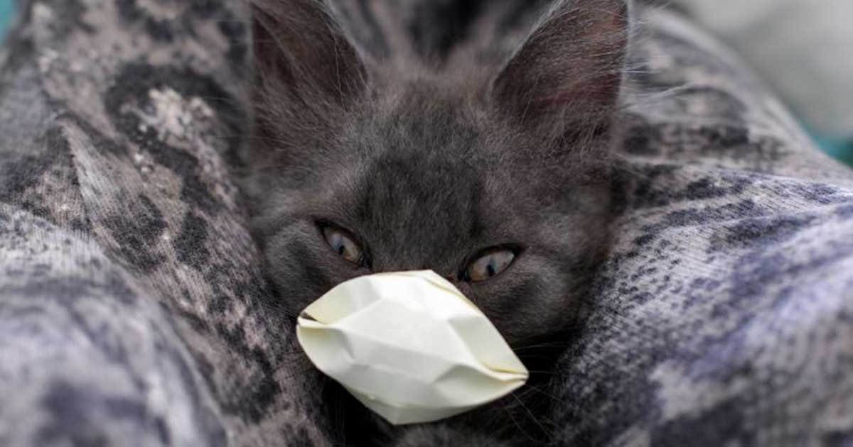 gettyimages 1209556582.jpg?resize=412,232 - 2 Cats Are Now First US Pets To Test Positive For Coronavirus