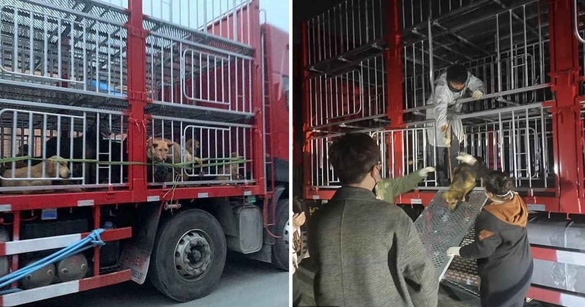 ggsss 3.jpg?resize=1200,630 - 423 Stolen Pets Have Been Freed From An Illegal Dog Slaughtershouse In China Amid Coronavirus