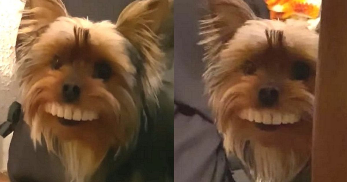 ireba.png?resize=1200,630 - 【じわじわ】自身の入れ歯が突然無くなり探していた際に飼い犬の姿を見た瞬間…