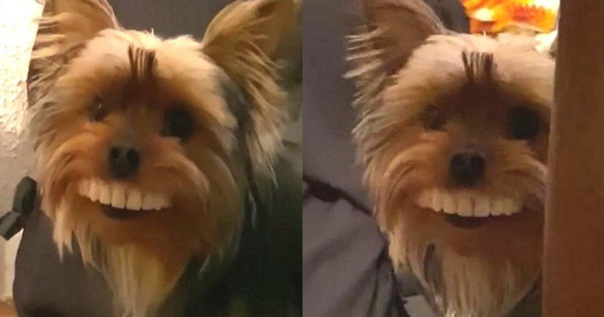 ireba.png?resize=412,232 - 【じわじわ】自身の入れ歯が突然無くなり探していた際に飼い犬の姿を見た瞬間…