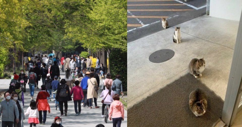 "kakaotalk 20200427 021756955.jpg?resize=1200,630 - ""사람보다 동물이 더 잘 지키는데??""... '고양이'도 지키는 '사회적 거리두기'.jpg"