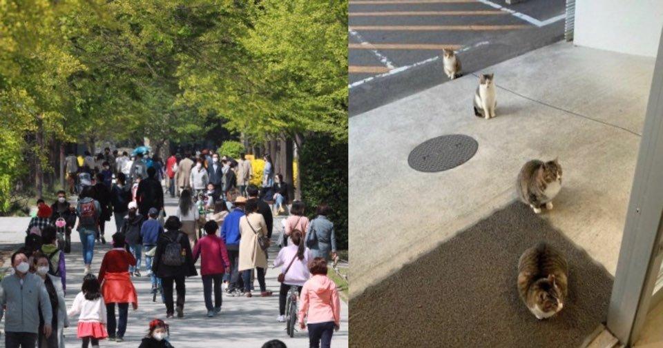 "kakaotalk 20200427 021756955.jpg?resize=412,232 - ""사람보다 동물이 더 잘 지키는데??""... '고양이'도 지키는 '사회적 거리두기'.jpg"
