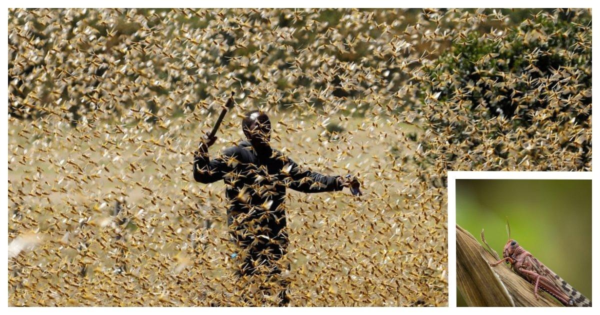 locust cover.jpg?resize=1200,630 - East Africa Prepares For The Second Locust Outbreak of 2020