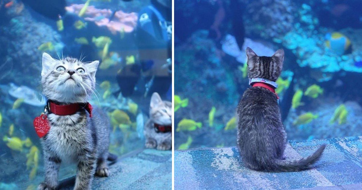 ssdf.jpg?resize=412,232 - Rescue Kittens Of 'Atlanta Humane Society' Visit A Closed Aquarium During Quarantine