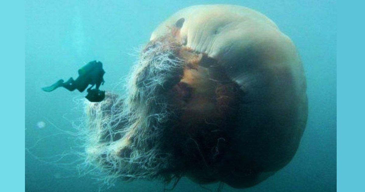 twitter killy e1586346230458.jpg?resize=412,232 - Top 10 d'incroyables animaux géants photographiés à travers le monde