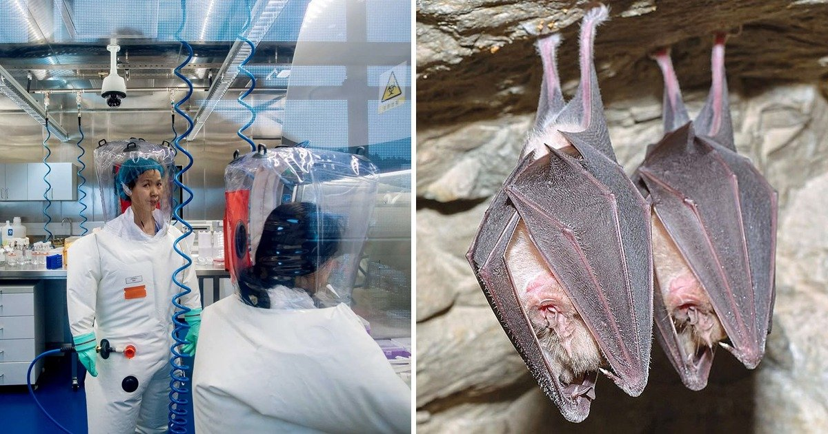 whatsapp image 2020 04 12 at 11 06 50 am.jpeg?resize=1200,630 - The Deadly Disease Deemed To Have Originated From Caves As Wuhan Lab Performed Experiments On Bats