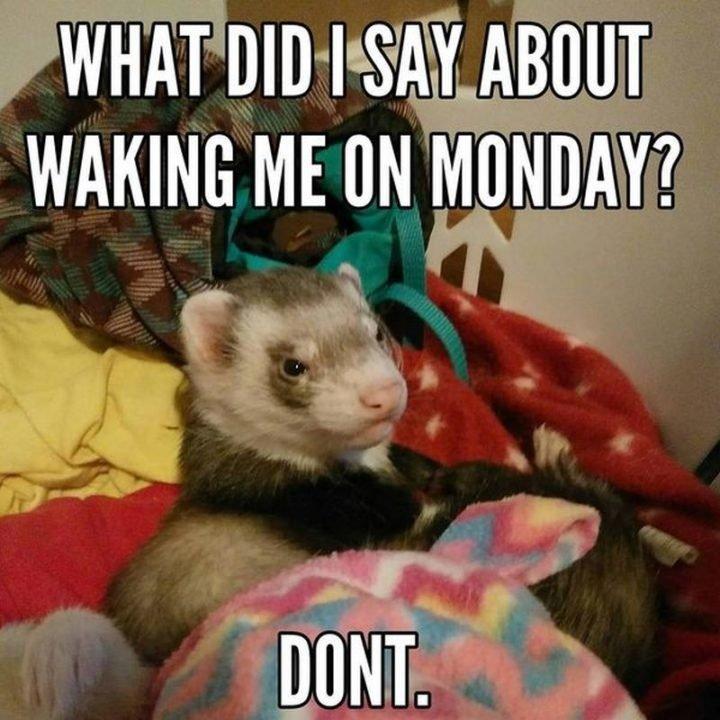 Top 26 its Monday Memes -