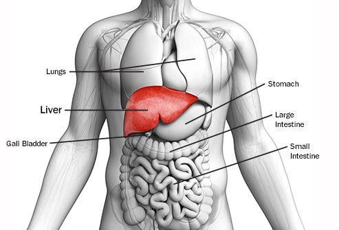how can you check liver disease symptoms