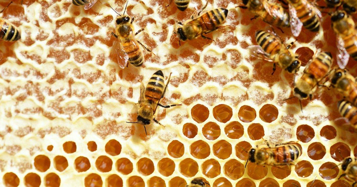 abeilles.png?resize=1200,630 - Confinement : Selon cet apiculteur, les abeilles n'ont jamais produit autant de miel en 20 ans