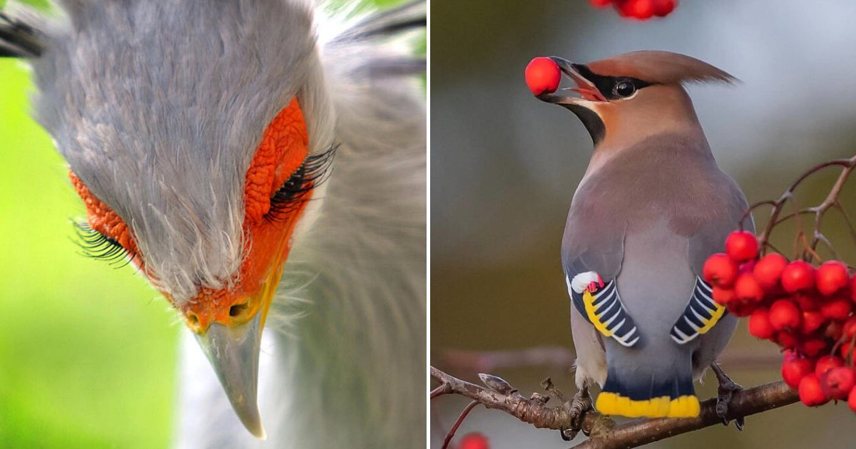 birds.png?resize=300,169 - Beautiful Birds You Have Probably Never Seen Before, 15+ Photos