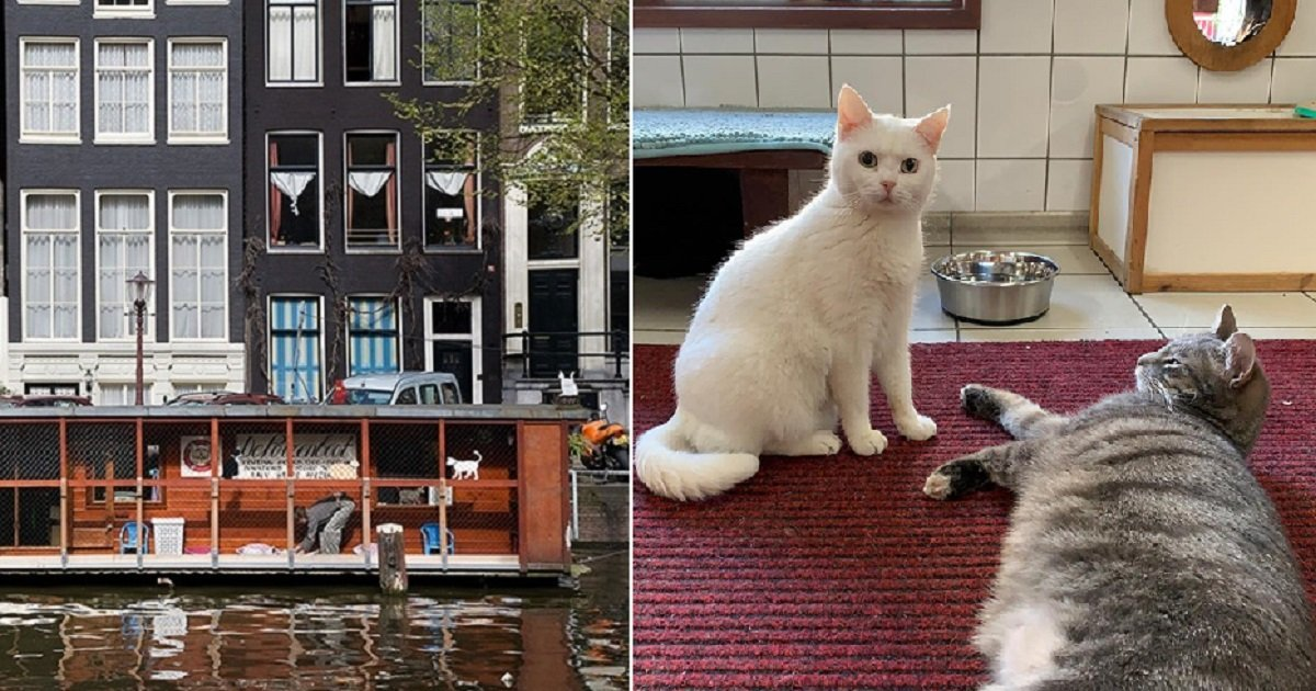 """c4.jpg?resize=1200,630 - """"De Poezenboot"""" In Amsterdam Is The World's First (And Only!) Floating Cat Sanctuary"""