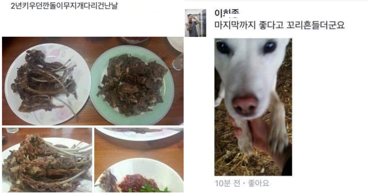 "collage 165.png?resize=412,232 - ""2년동안 키운 '깐돌이' 한 점 하실분??"" 역대급 리얼 관종 레전드"