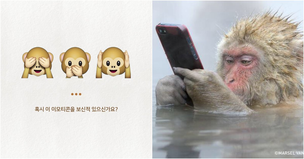 "collage 208.png?resize=1200,630 - ""다 알고있었어??"" 자주쓰는 '원숭이 이모티콘'에 대한 놀라운 비밀"
