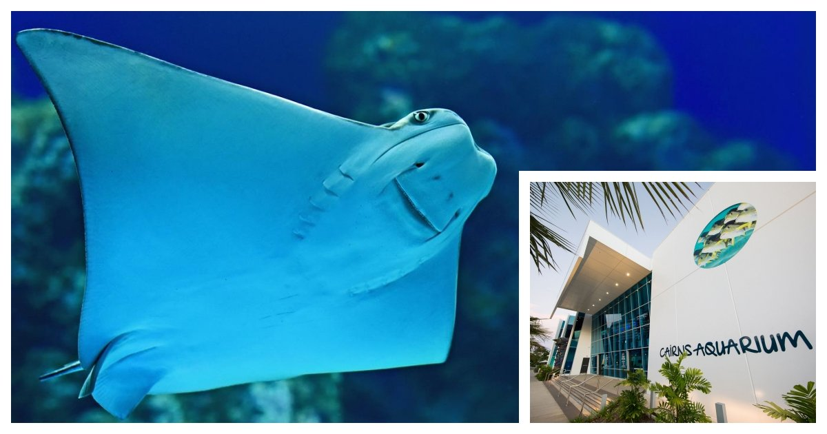 collage 34.jpg?resize=1200,630 - Fish In Aquarium Are Showing Symptoms of Depression Due to The Lack of Human Visitors