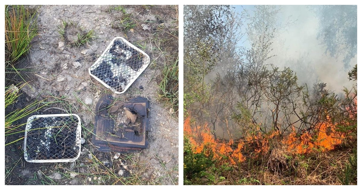 collage 52.jpg?resize=1200,630 - Large Forest Fire In UK Has Been Caused By Visitors Who Barbecued In Restricted Areas