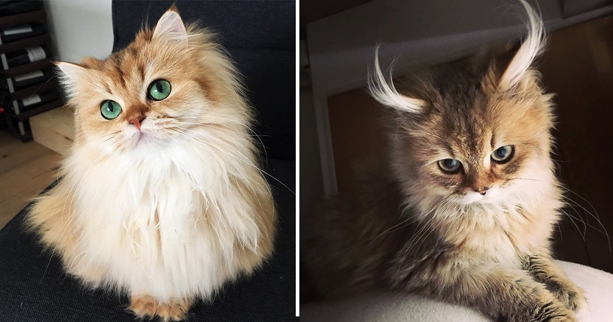 cutest cats.jpg?resize=1200,630 - Compilation of The Cutest Cat In The World Has Viewers Struck In Awe