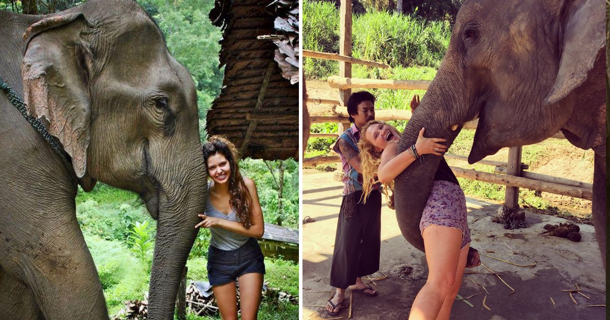 elephants love human.jpg?resize=1200,630 - Do Elephants Think Humans Are Cute- Surprising Study Reveals Answer