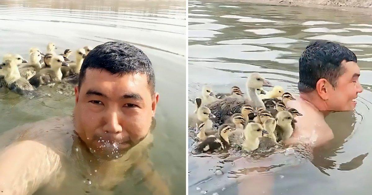 fgdfg.jpg?resize=1200,630 - Chinese Goose Farmer Enjoys Swimming With Goslings On His Back