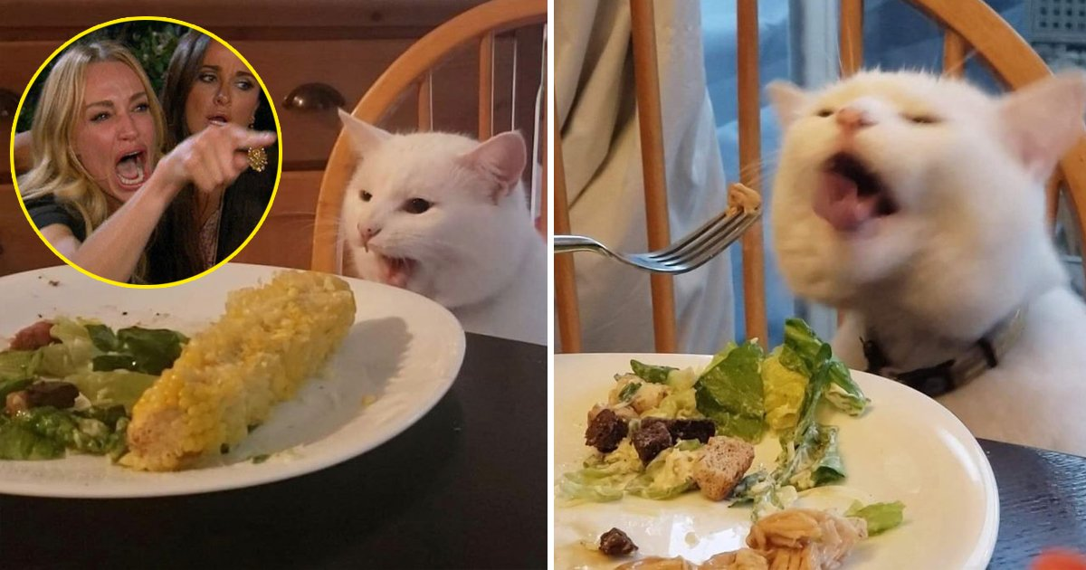 funny cat table.jpg?resize=412,232 - Story Behind Cat At Table Meme: Cat Has Now 620K Instagram Followers