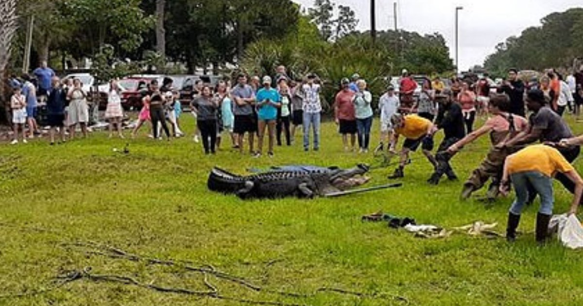 gator5.png?resize=412,232 - Around 30 People Were Seen Sitting And Riding On Top Of An Alligator Before It Was Euthanized