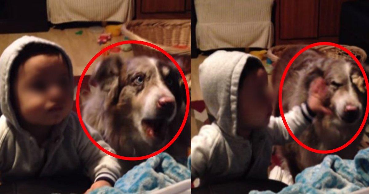 inumama.png?resize=1200,630 - おやつ目当てで子どもが目を光らせるもそれに便乗するように「ママ」と発した飼い犬が話題に?