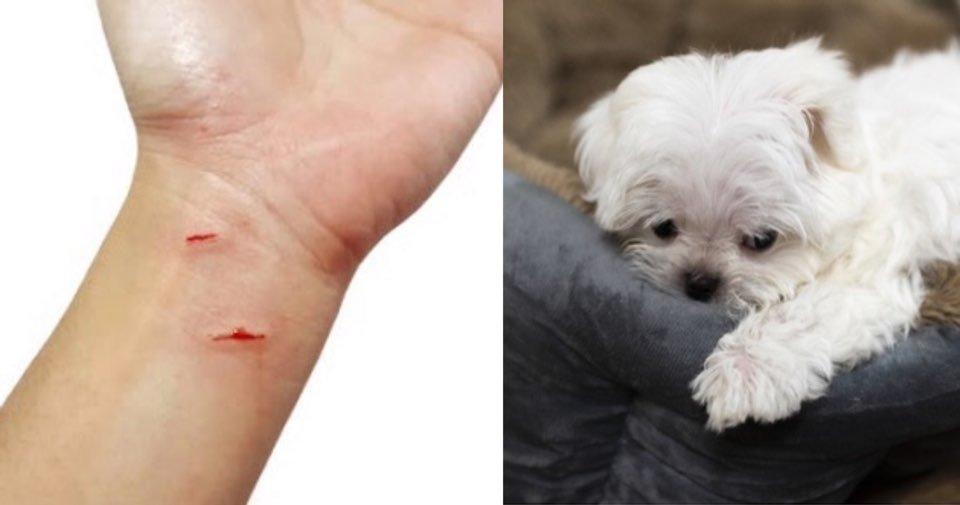 """kakaotalk 20200518 220341455.jpg?resize=1200,630 - """"강아지가 식당에서 제 손가락을 물어서 던져버렸어요"""""""