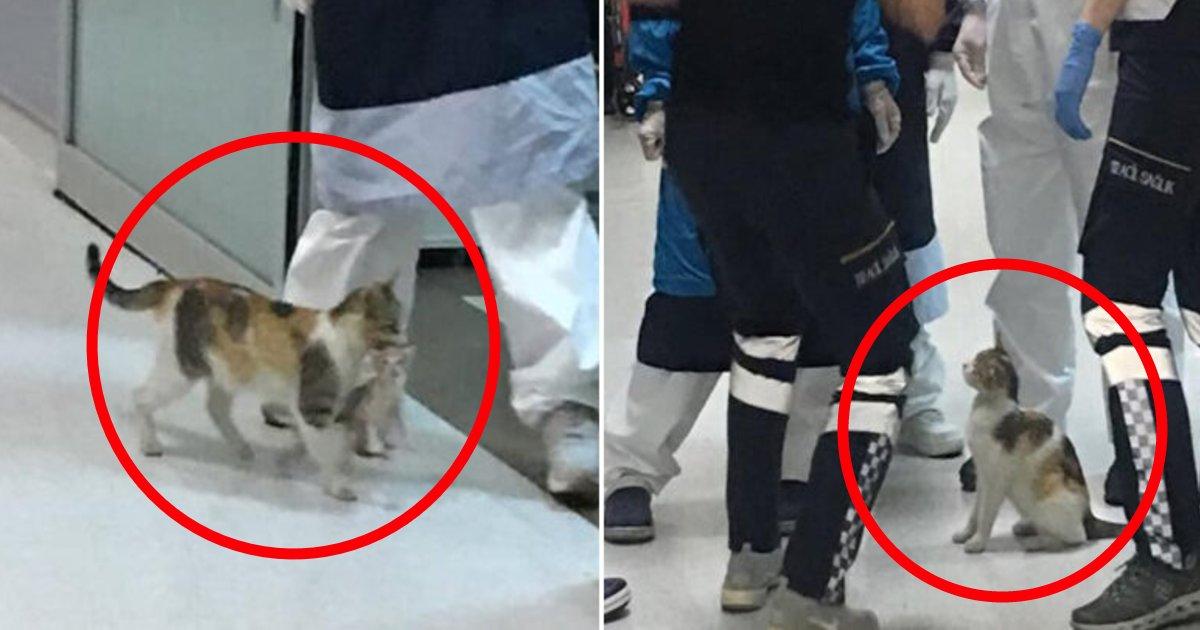nekobyouin.png?resize=1200,630 - 母は強し?具合の悪い子猫を治療してほしいと直接病院に足を運んだ母猫