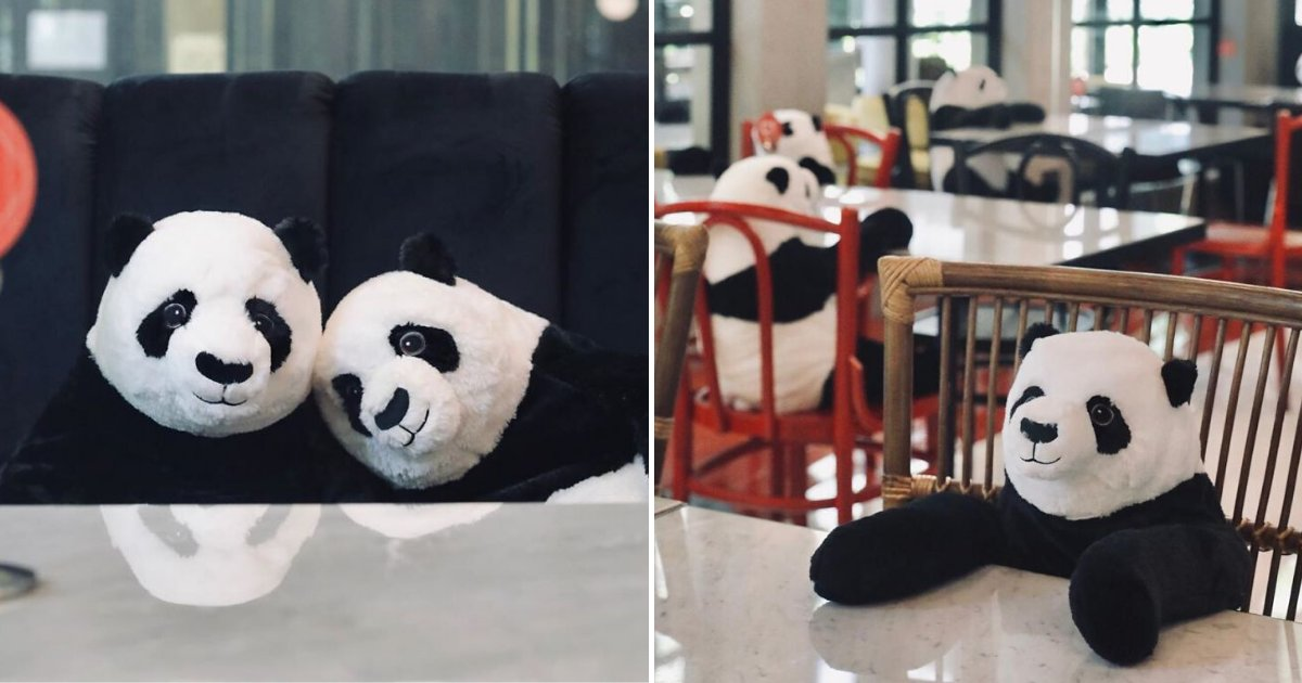 pandas5.png?resize=412,232 - Restaurant Comes Up With Genius Idea To Help Diners Feel Less Lonely While Social Distancing