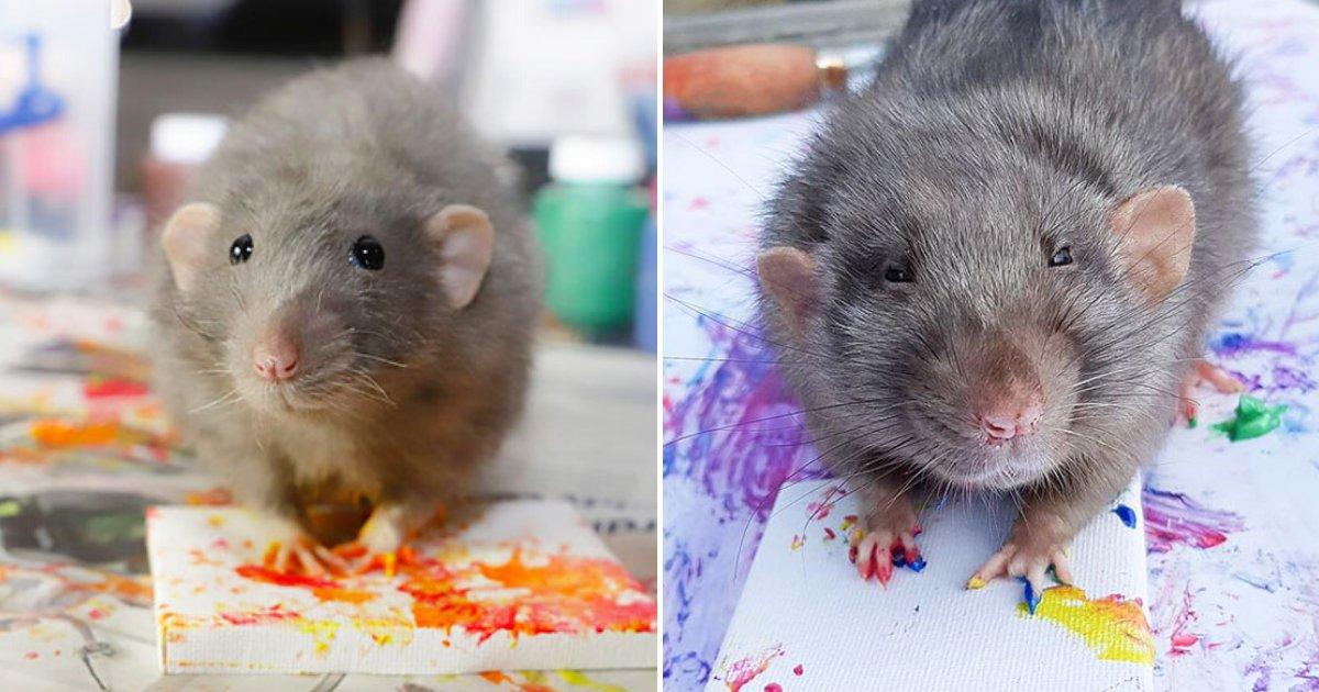 rats7.png?resize=412,232 - Talented Rats Create Tiny Paintings And Their Beautiful Work Is Sold Out!