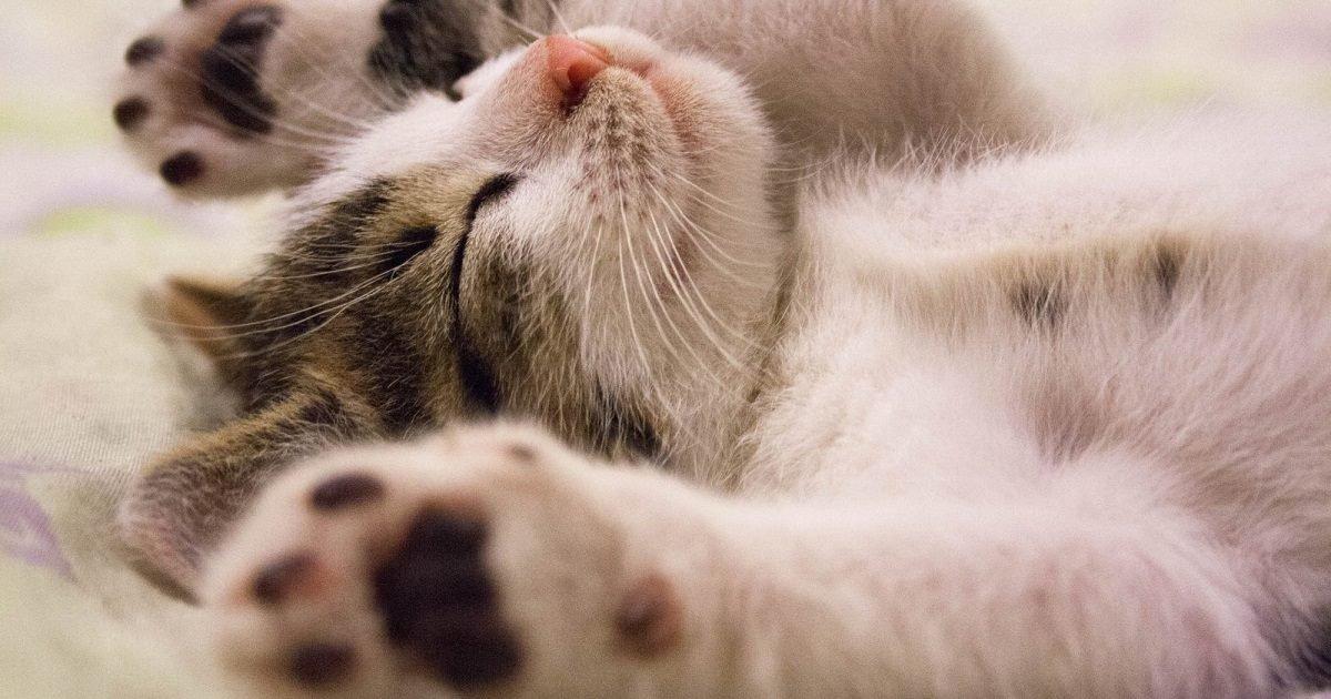 rythme fm e1589130801639.jpg?resize=1200,630 - 12 Photos de chats qui mettent de bonne humeur