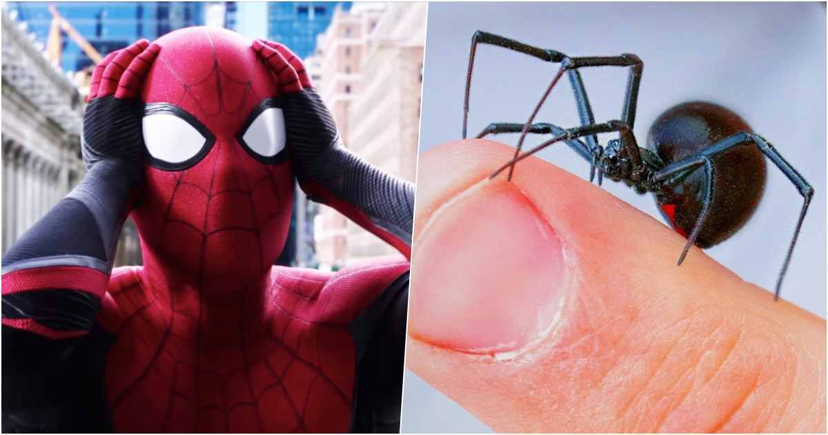 spider thumb.jpg?resize=412,232 - Three Young Brothers Lets A Black Widow Bite Them, Hoping It Would Turn Them Into Spider-Man