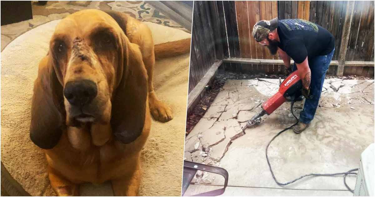 thumbnail 10.jpg?resize=412,232 - Dog With Medical Issues Finally Finds Home and Gets His Own Garden