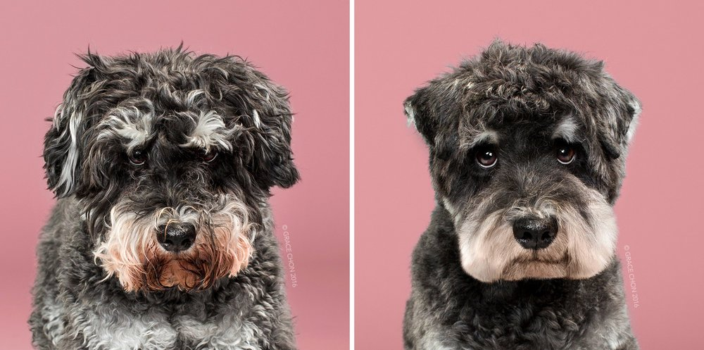 best before and after dog grooming pictures