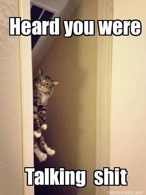 sassy cats