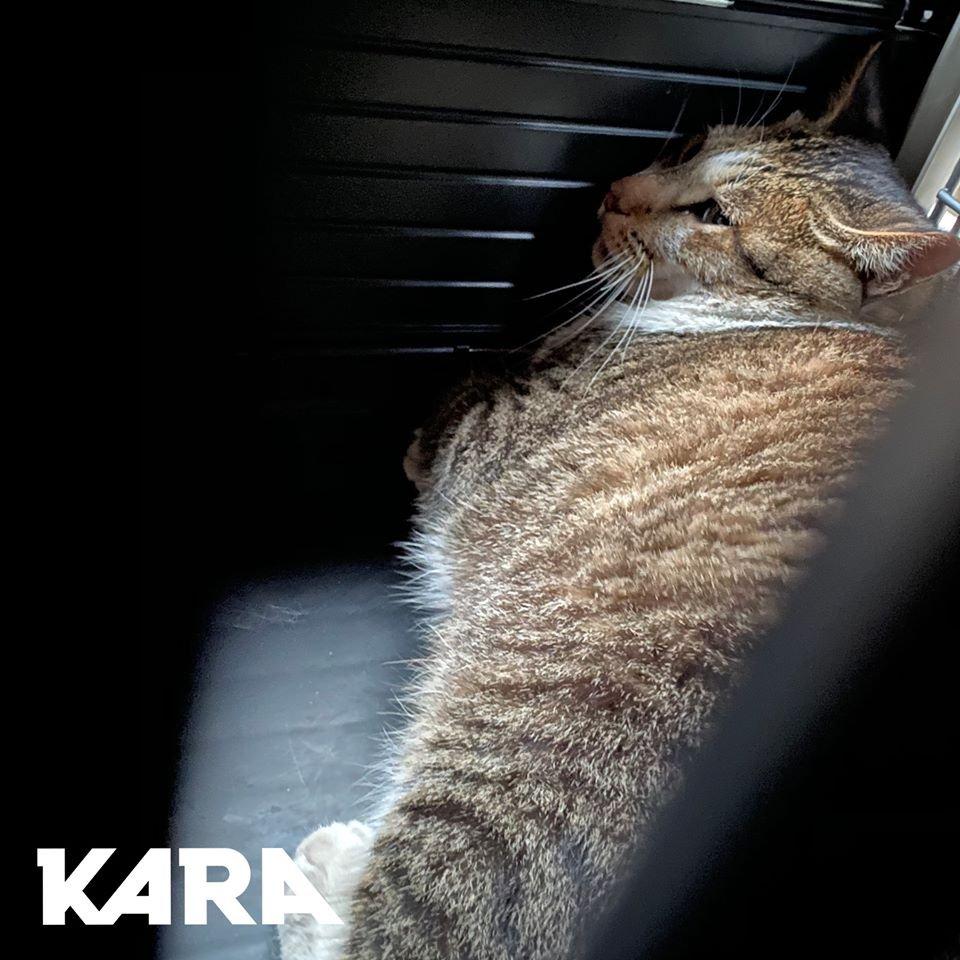 이미지: 고양이