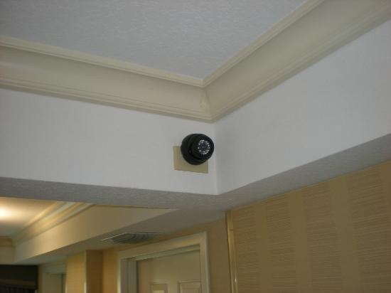 Foto de Radisson Hotel Orlando - Lake Buena Vista: Cámaras de ...