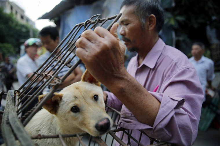 China Dog-Meat Festival Gets Low-Key Opening Amid Protests