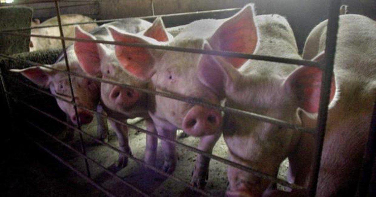 Descubren en China una nueva cepa de la gripe con «potencial ...