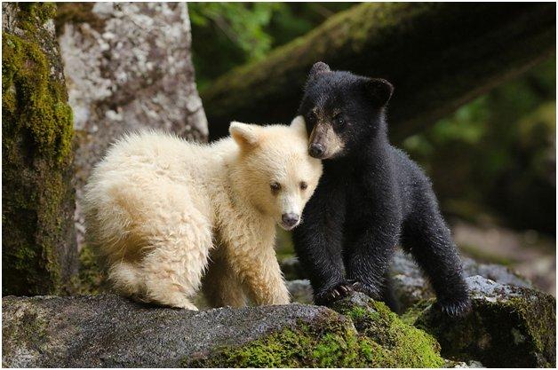 bear mistaken for dog