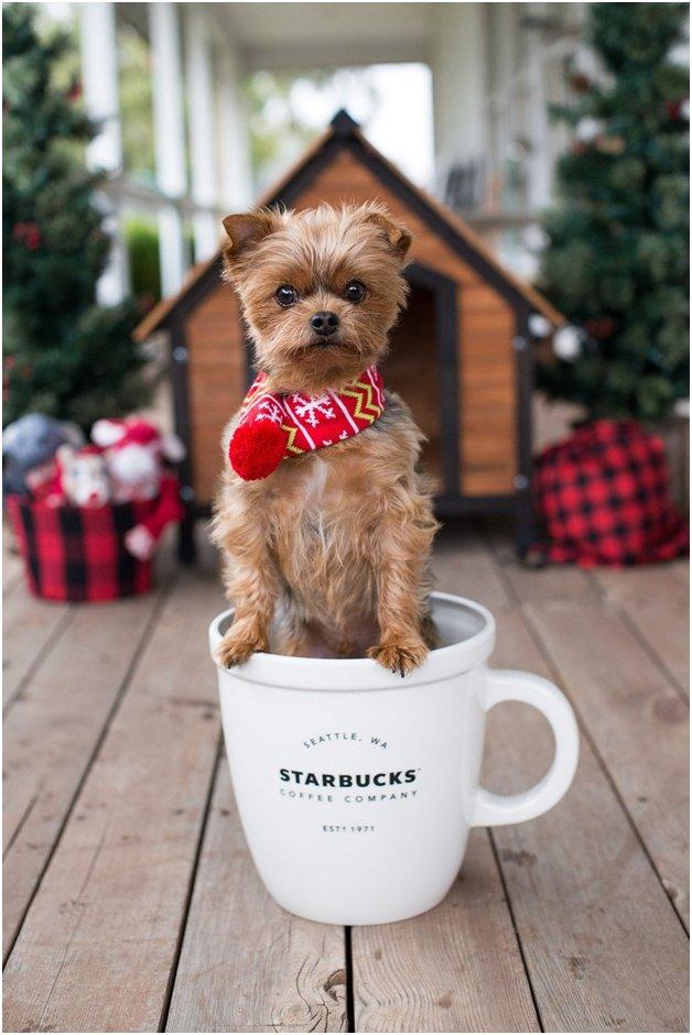 Starbucks pup cup